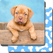 Download Puppy Games Kids - Cool Puppies for Cool Kids APK